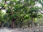 雙流瀑布:翠綠的森林