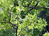 雙流瀑布:春天染綠了楓香