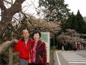 阿里山櫻花季:老鍾夫婦