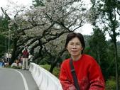 阿里山櫻花季:0019
