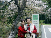 阿里山櫻花季:0020
