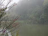 20110312南庄向天湖一日遊:20110312南庄向天湖055.jpg