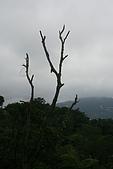 20090301-仙跡岩步道:IMG_2951.jpg