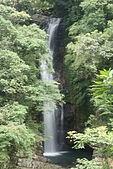 20090613-內洞國家森林遊樂區記:IMG_4984.jpg