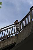 20100717-花蓮-包子麻糬:20100717-花蓮-包子麻糬 (20).JPG