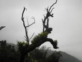 登山:2014.02.09 (17).JPG