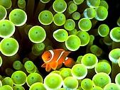 我愛的圖片:帛琉海3.jpg