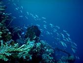 我愛的圖片:帛琉海4.jpg