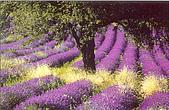 我愛的圖片:紫色的蛋捲.jpg