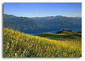 我愛的圖片:迎接朝陽的金針花.jpg