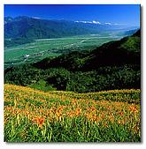 我愛的圖片:金針花山與台東縱谷.jpg