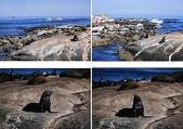 南非之旅:海豹島.jpg