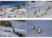 南非之旅:南非企鵝.jpg