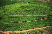 斯里蘭卡(風景篇):SLK4 (126).jpg