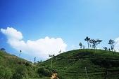 斯里蘭卡(風景篇):SLK4 (623).jpg