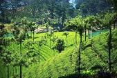 斯里蘭卡(風景篇):SLK4 (669).jpg