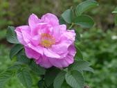 花園剪影_20190416-19:P2230850.JPG