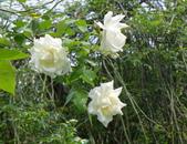 花園剪影_20190416-19:P2230854.jpg
