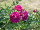 花園剪影_20190416-19:P2230937.JPG