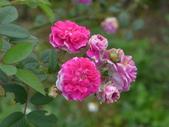 花園剪影_20190416-19:P2240574.JPG