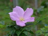 花園剪影_20190416-19:P2240572.JPG