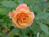 花園剪影_20190416-19:P2240352.JPG
