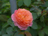 花園剪影_20190416-19:P2240326.JPG