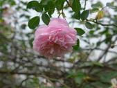 花園剪影_20190416-19:P2240394.JPG