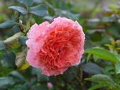 花園剪影_20190416-19:P2240495.JPG