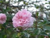 花園剪影_20190416-19:P2240277.JPG