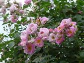 花園剪影_20190416-19:P2240641.JPG