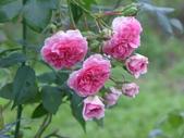 花園剪影_20190416-19:P2230522.JPG
