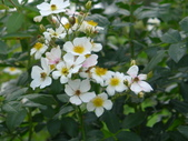 花園剪影_20190416-19:P2230822.JPG