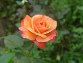 花園剪影_20190416-19:P2240351.JPG