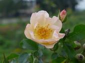 花園剪影_20190416-19:P2240478.JPG