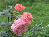 花園剪影_20190416-19:P2230874.jpg