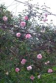 花園剪影_20190416-19:P2230572.jpg