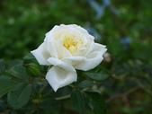 花園剪影_20190416-19:P2240507.JPG