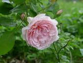 花園剪影_20190416-19:P2240457.JPG