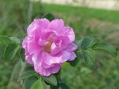 花園剪影_20190416-19:P2240046.JPG