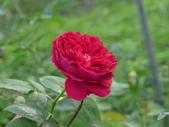 花園剪影_20190416-19:P2240146.JPG
