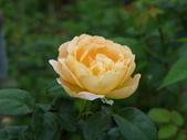 花園剪影_20190416-19:P2240688.JPG
