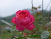 花園剪影_20190416-19:P2240324.JPG