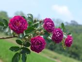 花園剪影_20190416-19:P2230943.JPG