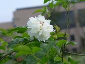 花園剪影_20190416-19:P2240207.JPG