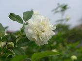 花園剪影_20190416-19:P2240210.JPG