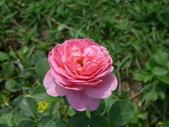 花園剪影_20190416-19:P2230950.JPG