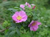 花園剪影_20190416-19:P2240371.JPG