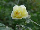 花園剪影_20190416-19:P2240141.JPG