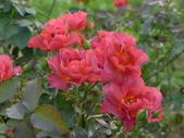 花園剪影_20190416-19:P2240155.JPG